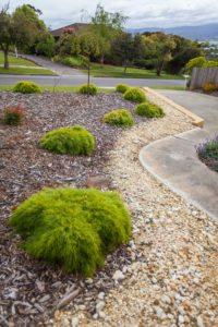 backyard gravel plants