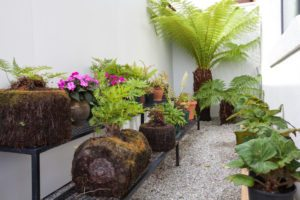 Fernery and plants