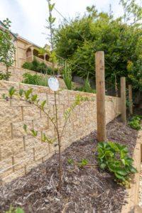 Planting plants landscaping Tasmania