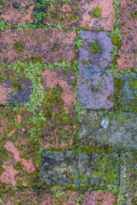 moss filled paving bricks