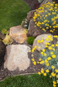 Landscaping launceston rock garden plants