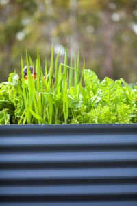 easy to maintain garden beds