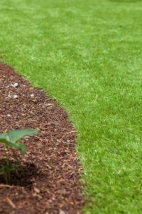 gorgeous turf launcestons best grass