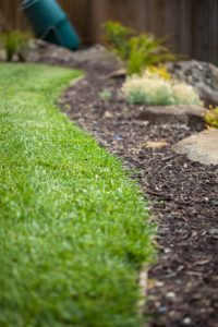 green grass, clean garden, edging, landscaping
