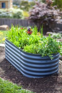 planter box, plantings, tin, vegetables