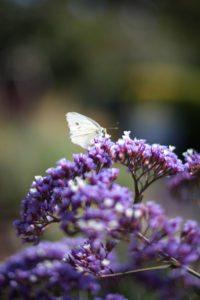 garden, landscaping, flower