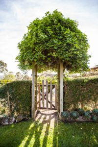award winning cottage garden, gate with hedge