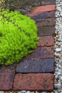 brick edging with plants and gravel